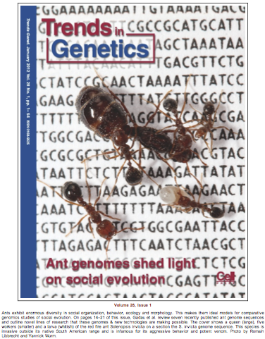 TIGs ant genomes
