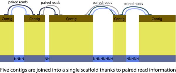 ContigsJoinedToScaffold