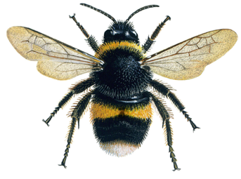 Foraging bumblebees acquire a preference for neonicotinoid-treated food with prolonged exposure